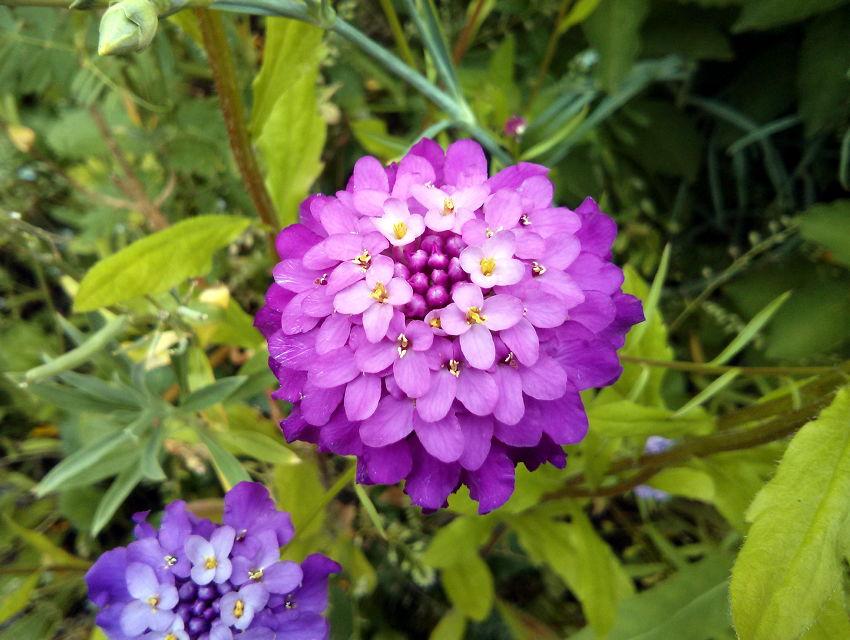 Blumen Im Vorgarten Janjans Blog